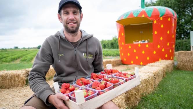 Hoevewinkel Lierse asperges gaat vreemd: voortaan ook zelf geteelde aardbeien in de aanbieding
