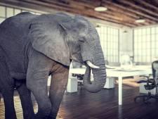 Mensen slimmer dan dieren? Echt niet. Dit kunnen we van ze leren