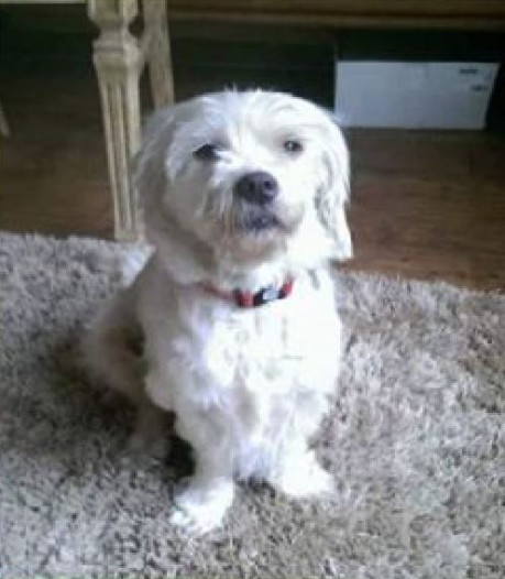 Vermist hoogzwanger hondje in Zwolle weer terecht: 'Ze zat achter een doos'