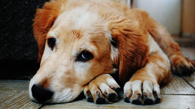 Het 7-stappenplan tegen doggy blues