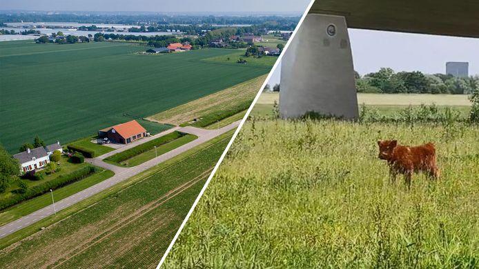 Park Lingezegen, de beoogde bouwlocatie voor huizen (links) en een eenzaam kalfje bij de Spiegelwaal (rechts).