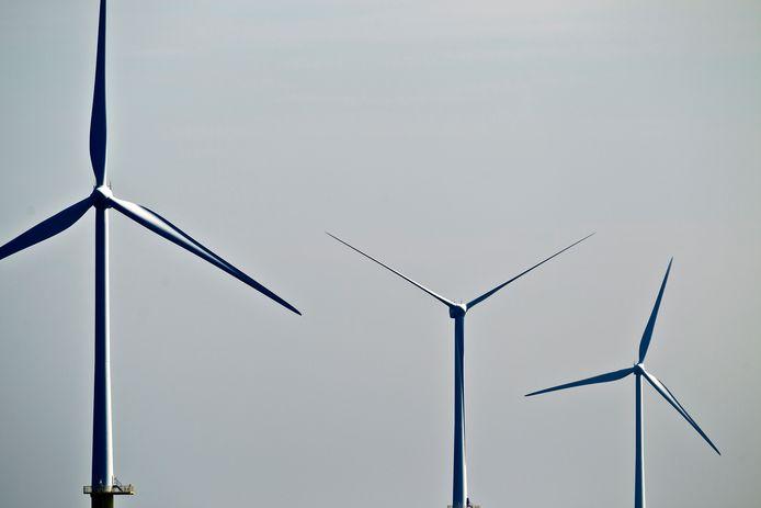 Windmolens mogen het vogelleven niet aantasten.