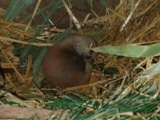 Pandajong Avifauna nu buiten te zien: 'Dit beestje is zó fotogeniek'