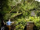 Omgevallen bomen worden opgeruimd, een dag na de hevige storm.