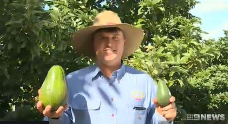Boer Ian Groves uit Bundaberg in de Australische staat Queensland, poseert trots met een door hem gekweekte avozilla, en een gewone avocado.