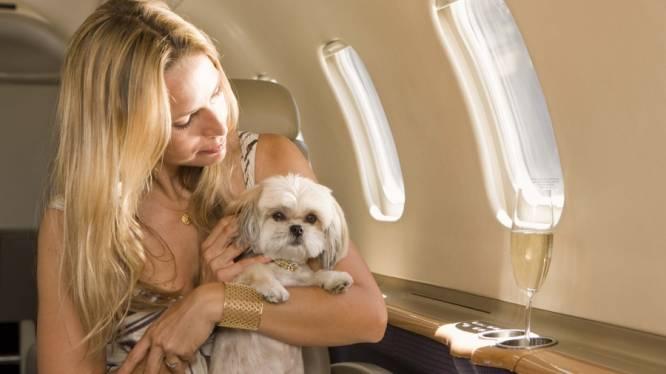 Je huisdier meenemen op reis: doen of niet?
