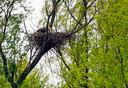 Een nest van zeearenden.
