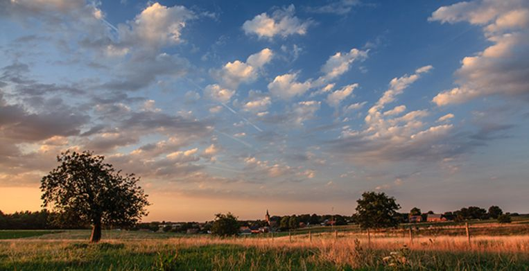 Countryside landscape with a small village in the background, surrounded by fields and grassland, two trees in the middle of the field. Picture taken at sunset, with warm tones, colored sky and white cotton clouds. Beeld Getty Images