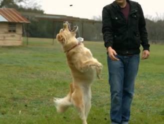Prachtige slow motion: hond springt richting snoepje