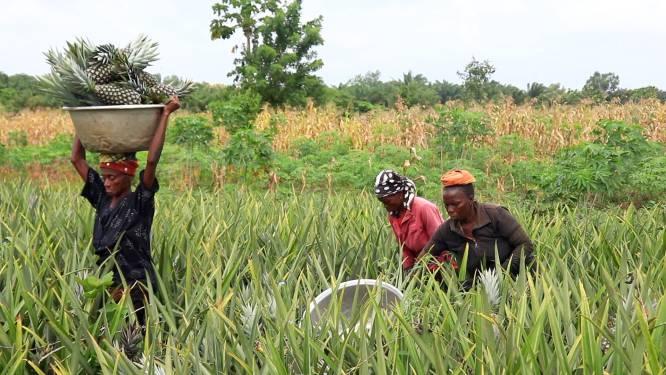 Lisette investeert in Afrikaanse ananasboeren: 'Samen iets voor elkaar krijgen, dat vind ik mooi'