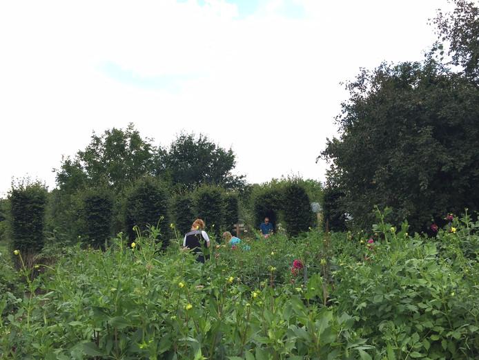 Bezoekers verzamelen bloemen in de pluktuin.