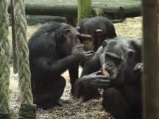 Dierenorganisaties boos op dierenpark: 'Doodschieten Mike en Karibuna onnodig'