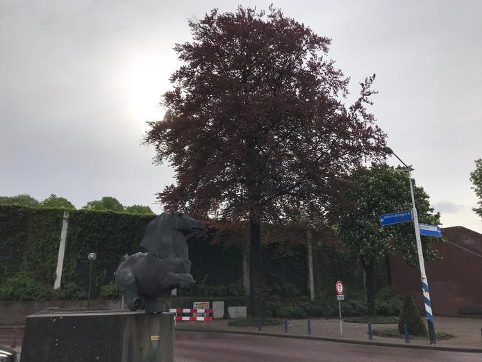 De bruine beuk aan het Maurickplein in Vught moet wijken voor herinrichting van het plein en de omgeving.