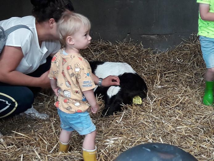 Even knuffelen met een koe.