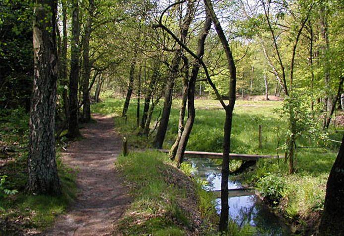 Landgoed Quadenoord bij Renkum.