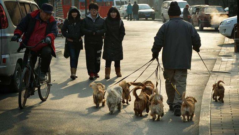 De hondenuitlaatdienst in China, teken van een opkomende middenklasse die wel een hond wil, maar geen tijd heeft om het dier uit te laten. Beeld AFP