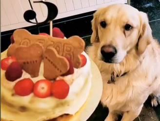 Verjaardagstaart voor je hond? Caroline (21) maakt het in haar 'hondenbakkerij'