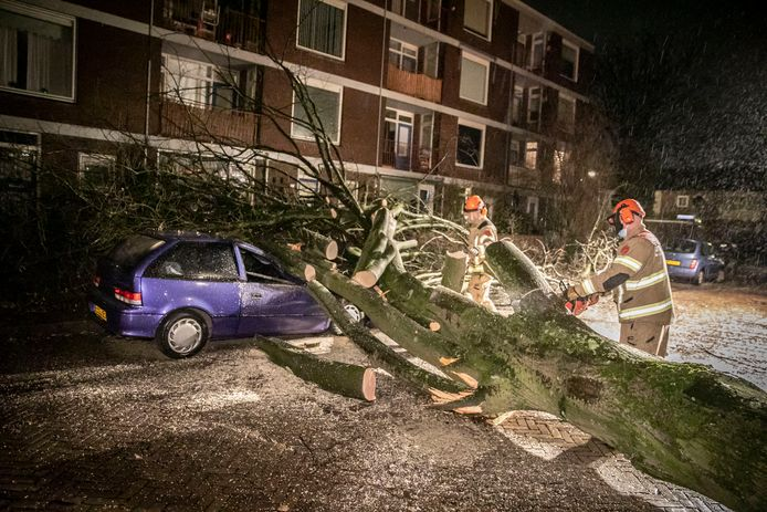 Omgevallen boom op  Eén boom op de Nijenbeeklaan in de wijk Presikhaaf in Arnhem.