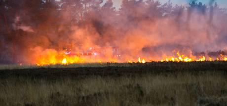 Dit is waarom het risico op natuurbranden steeds verder toeneemt in Veluwse bossen