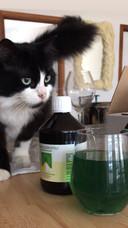 Ook de kat is geïnteresseerd in chlorofyl.