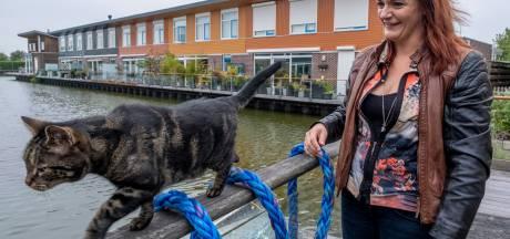 Klimtouwen redden katten van verdrinkingsdood in Vlissingen