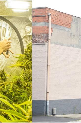 """Grote cannabisplantage in huurloods al opgerold nog voor wietkwekers één euro winst konden maken: """"Ze deden zichzelf de das om"""""""