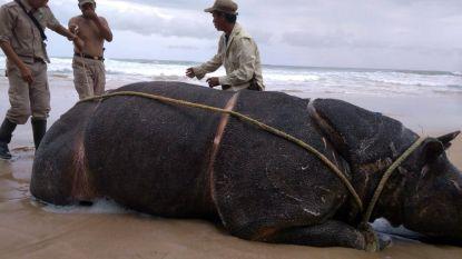 Nieuwe tsunami kan einde van Javaanse neushoorn betekenen