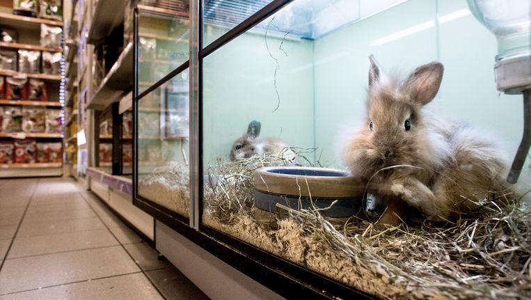 Pets Place Spoelt Geen Vissen Door Het Toilet Ze Zijn Niet