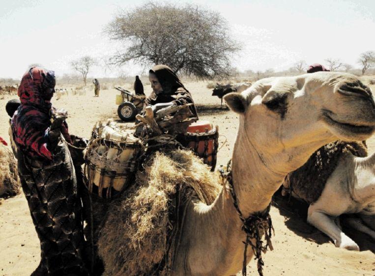 Keniaanse vrouwen laden water op hun kameel. De droogte dwingt ze water- en voedselrantsoenen met hun vee, hun levensader, te delen. (FOTO AP) Beeld AP