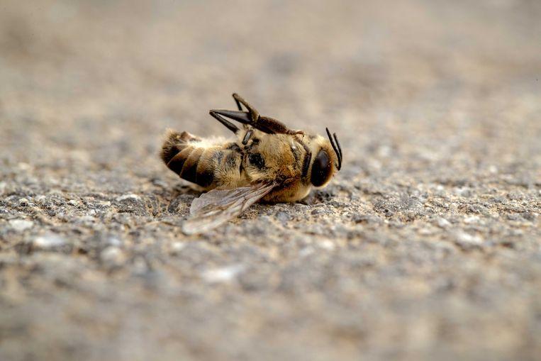 Een dode bij op het asfalt.  Beeld ANP