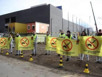 """Protest tegen nieuw slachthuis: """"Twee miljoen dieren per jaar? Dat kan nooit op fatsoenlijke manier"""""""
