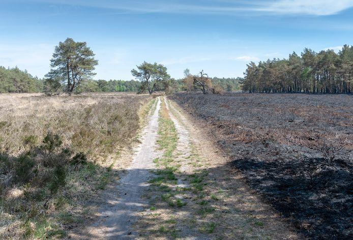 De natuurbrand op de Tongerense heide vorig jaar mei.