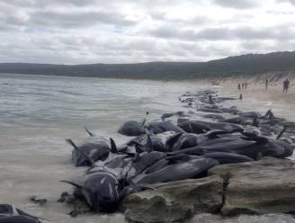 135 walvissen sterven op Australisch strand