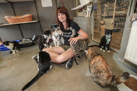Helene Boonen zorgt voor de katten in het asiel.
