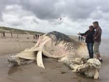 Dode walvis aangespoeld op Texel