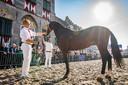 Sfeerbeeld van de Viaanse Paardenmarkt ten tijde van het 'oude normaal'.