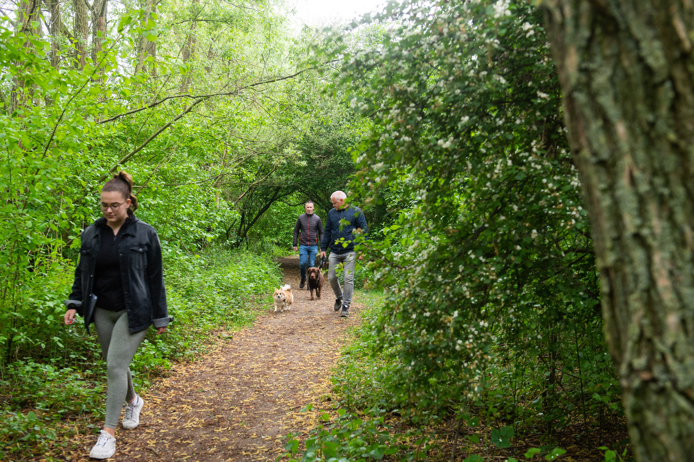 Raamsdonksveer - Bas Krooswijk (achteraan) en enkele wandelaars in natuurgebied Achter de Hoeven in Raamsdonksveer.