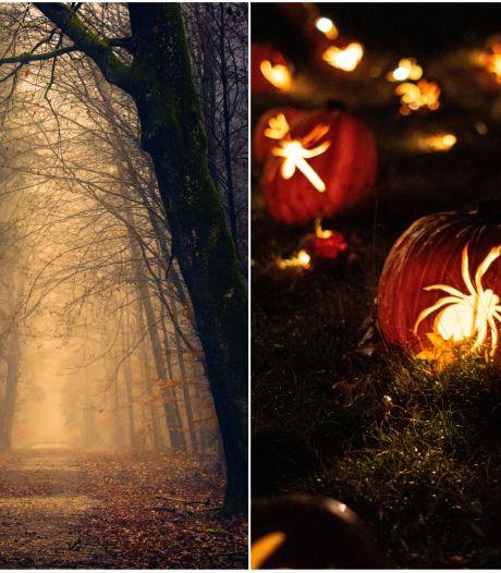 Les balades nocturnes à faire le soir d'Halloween en Wallonie pour frissonner