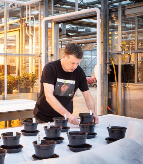 Wieger kweekt groenten op Marsgrond, met plas van 'astronauten'
