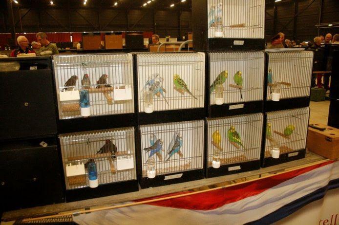 Duizenden vogels zijn op de vogelmarkt te bewonderen.