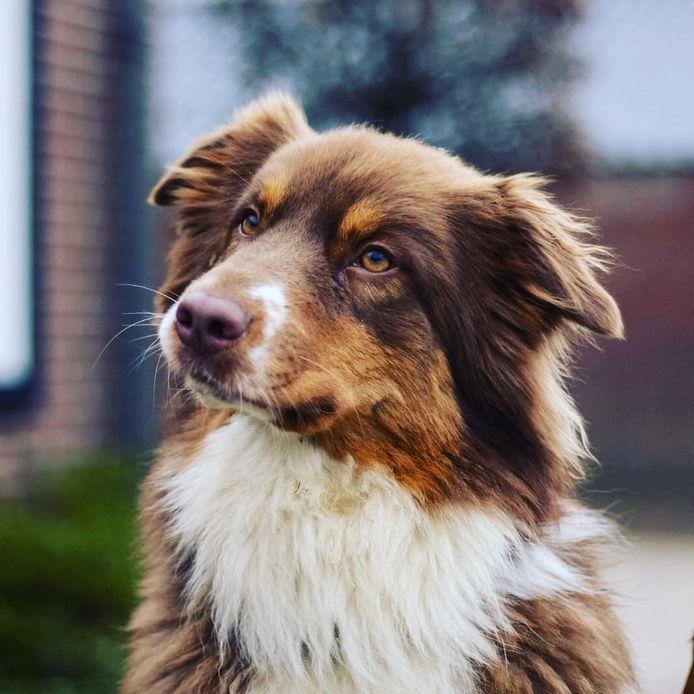 Gohya, de hond van Melanie Meijer, is al een maand vermist.