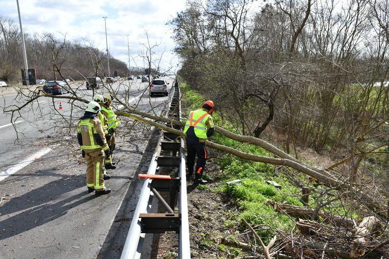 De E19 ter hoogte van Edegem werd geplaagd door omgewaaide bomen. Beeld Marc De Roeck