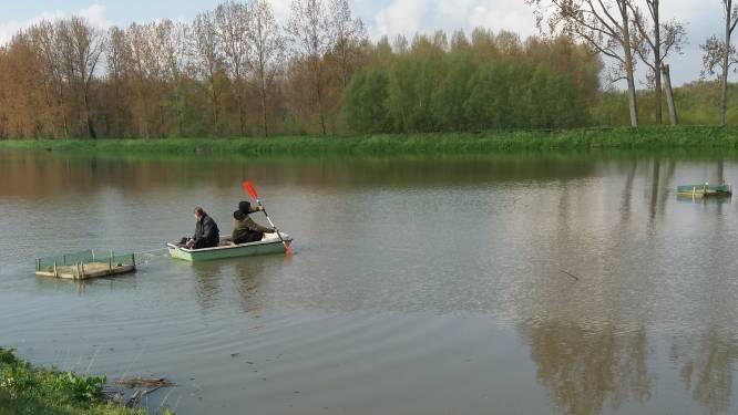 Vzw Durme plaatst broedvlotjes voor visdief op Meulendijkbroek