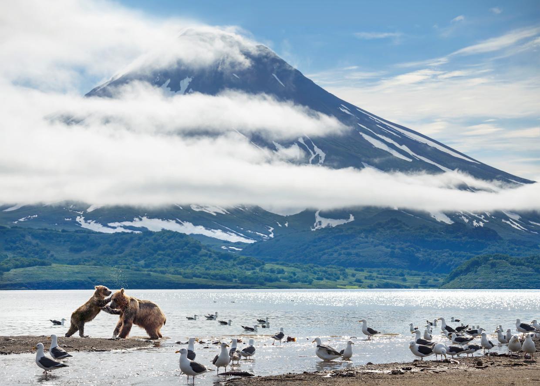 Een moederbeer dolt met één van haar welpen bij de vulkaan Diki Greben op het Russische schiereiland Kamtsjatka in 'A Perfect Planet' Beeld Photography Toby Nowlan copyright Silverback Films
