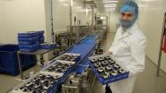 CSM Bakery investeert 7,5 miljoen euro in nieuwe muffinlijn