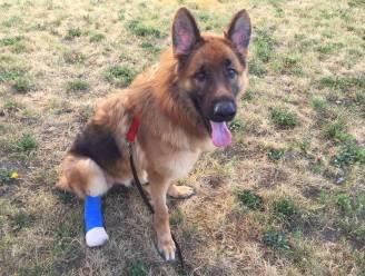 Nieuwe thuis voor mishandelde hond die eigen poot probeerde af te bijten om te ontsnappen