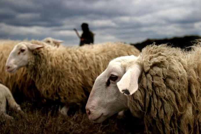 Bijzonder dat de natuur zulke verschillen maakt en het zwarte schaap toch kan overleven. Of zou het schaap het extra zwaar hebben?