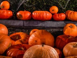 TIPS. De leukste halloweentochten in Leuven en het Hageland: griezelen van Diest tot Loonbeek