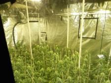 Politie stuit in Arnhemse 'spookwoning' op wietkwekerij met ruim 700 planten