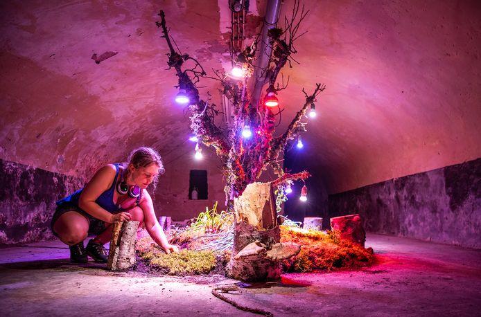 In de kelder van Pictura heeft kunstenares Anna Berendsen een heus ecosysteem nagebouwd.